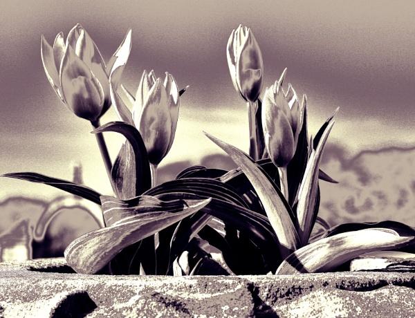 Fantasising Flora by adagio