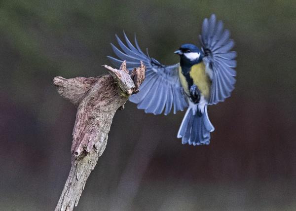 Coming In by photographerjoe