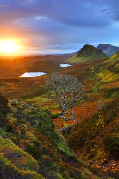 Celebrity Tree, Quiraing, Isle of Skye by wardc