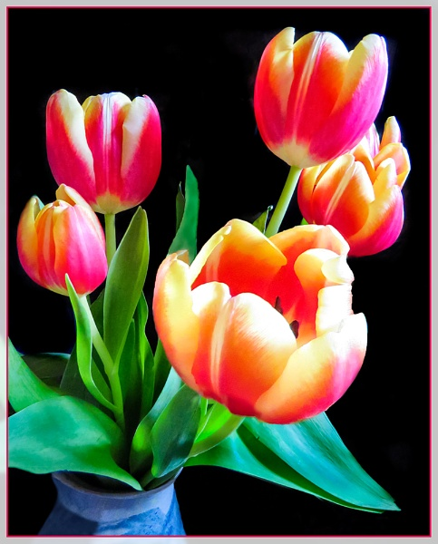 Tulips by Sylviwhalley