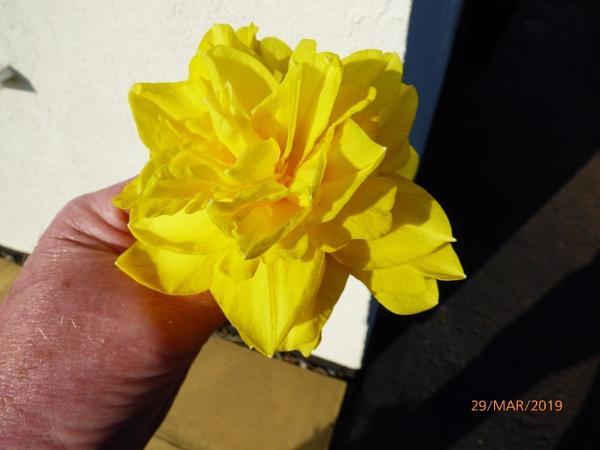 Yellow by ELLISON58