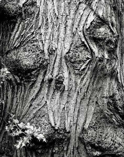 Tree by nclark