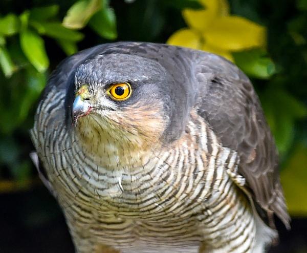 Mr Hawk by robert5