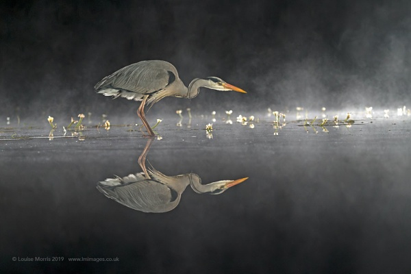 Nighttime Heron by Louise_Morris