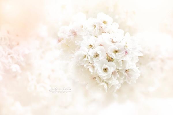 Prunus shirotae \'Mount Fuji\' by jackyp