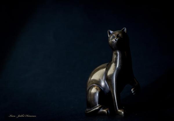 Cat in dark. by kuvailija
