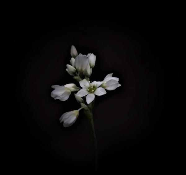 White On Black. by macromal