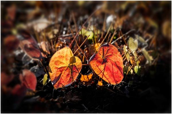 In The Spotlight by capto