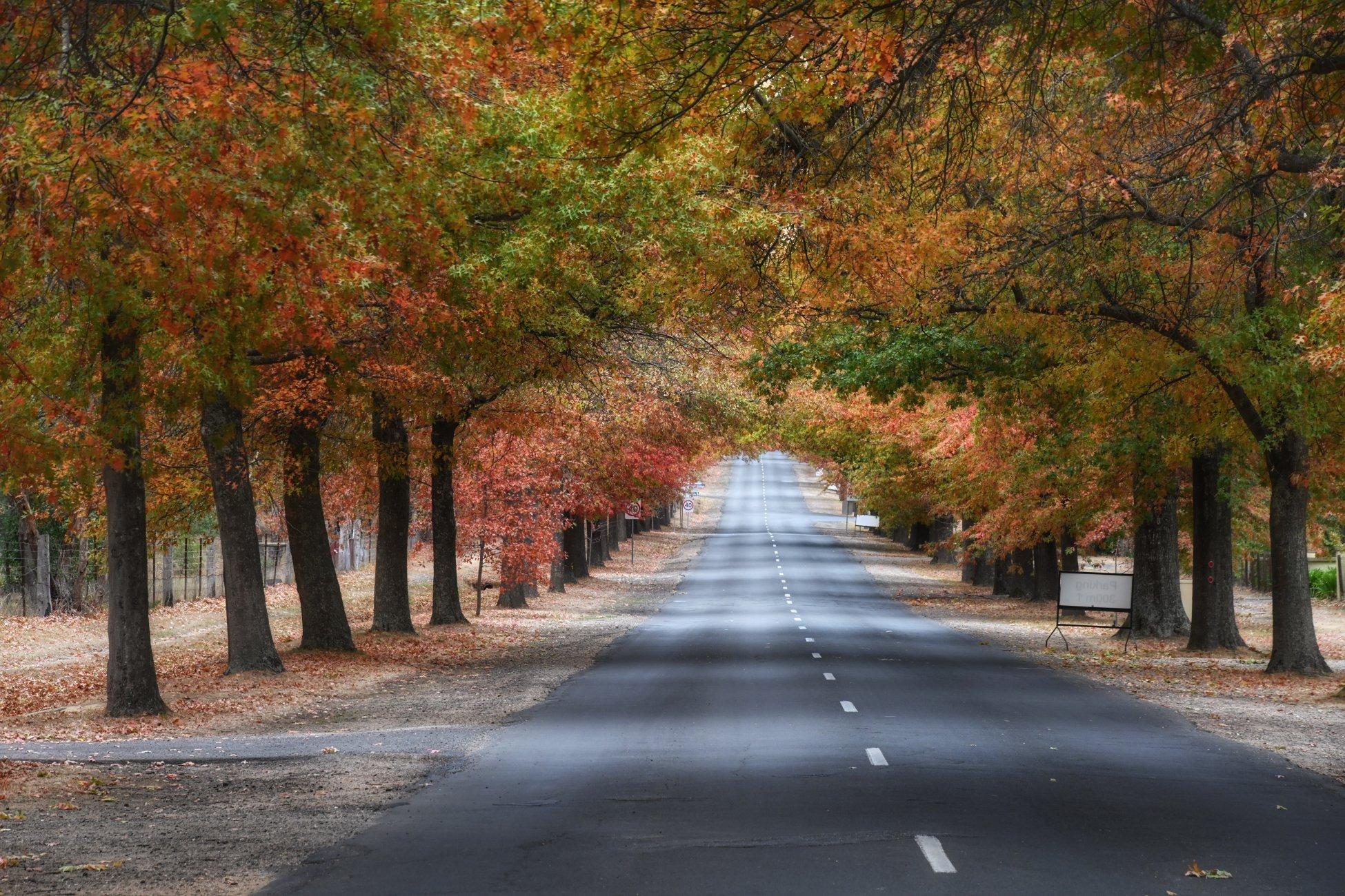 Honour Avenue