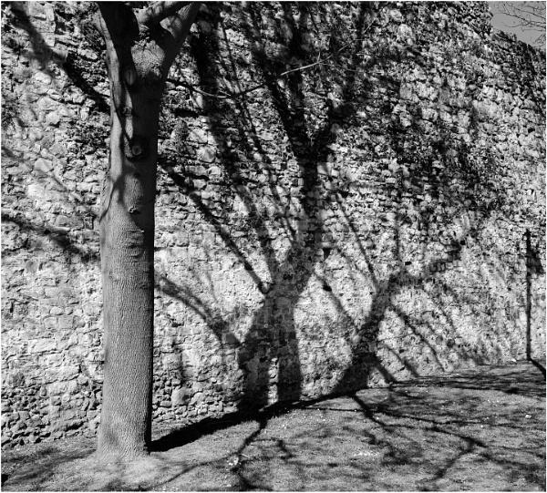 Tree Shadows by Nikonuser1