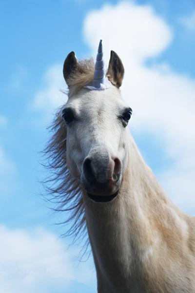 Unicorn by onlythepony