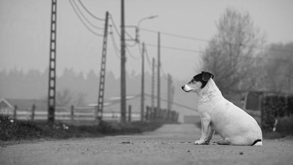 The black & white dog by Drummerdelight