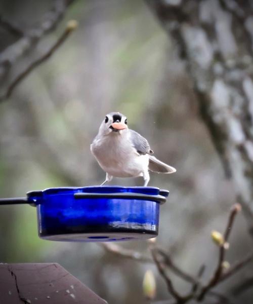 Beak full! by sheilajean48