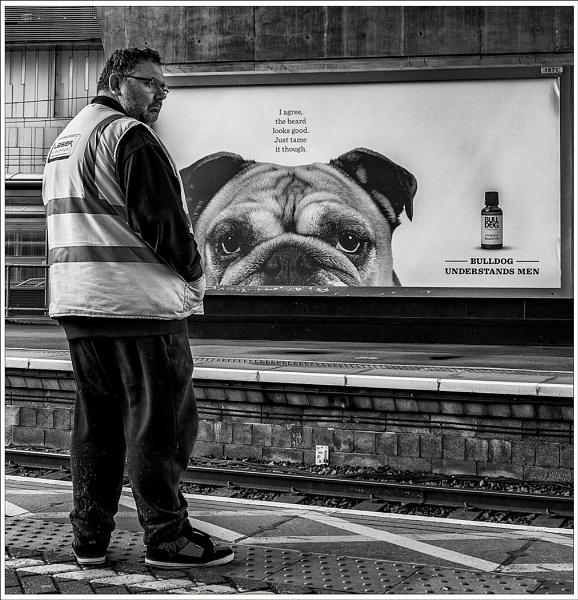 Bull Dog by MartinLeech