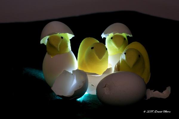 Peeps in The Dark by youcantoo