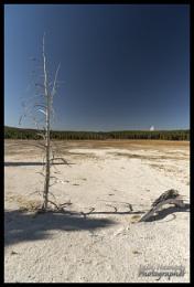 Petrified tree and stump