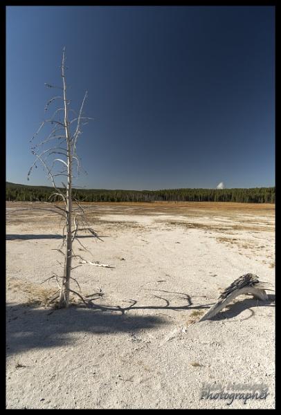 Petrified tree and stump by IainHamer