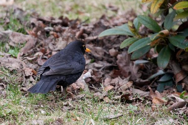 Springtime. Birds VIII by LotaLota