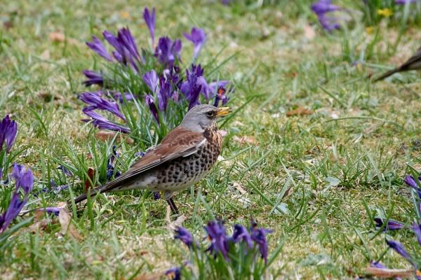 Springtime. Birds IX by LotaLota