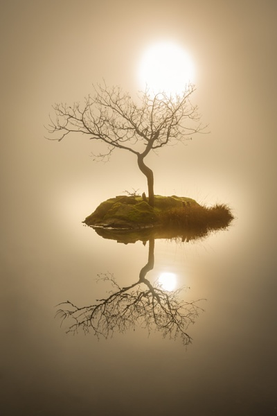 Lone Tree reflection by andycap59