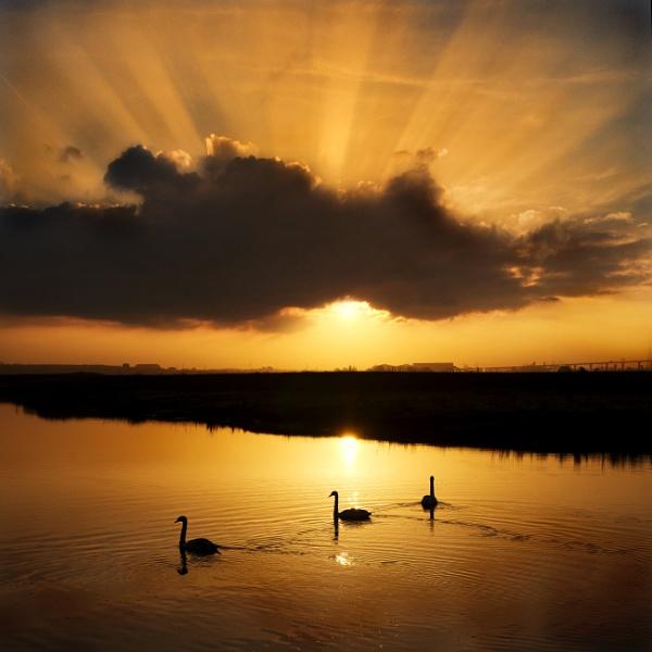 Golden Morning Rays by adriansart