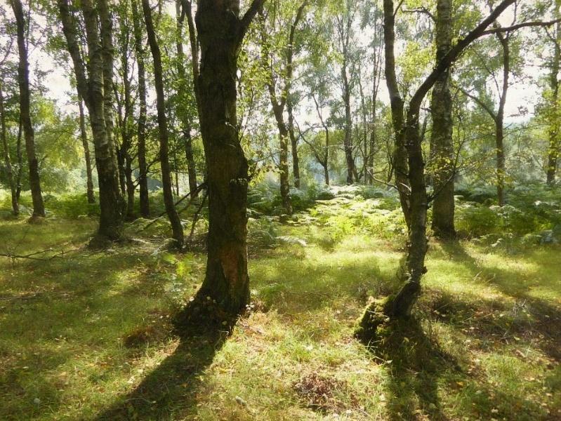Shinrin-Yoku in Dalby Forest