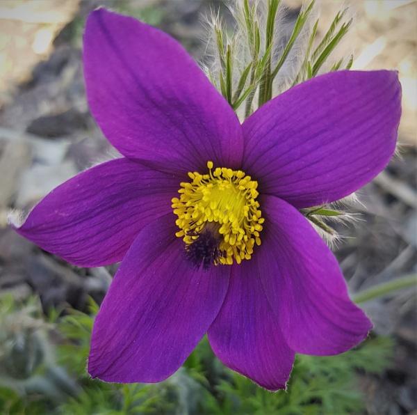 Flower by rosej