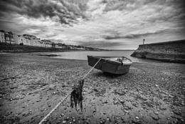 The Boatman Calls