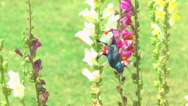 Gathering nectar by RajaSidambaram