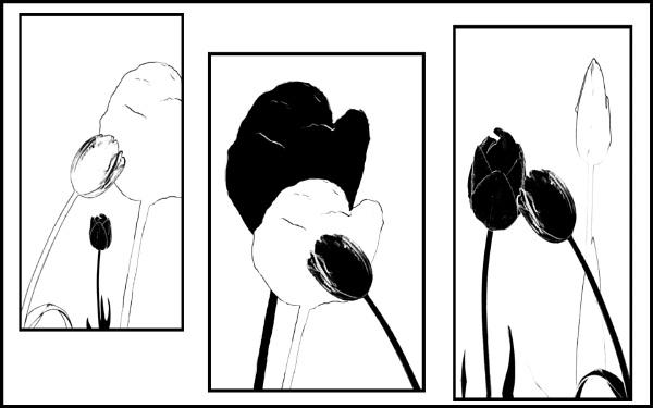 Tulip Triptych by Irishkate
