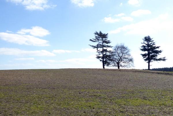 Three Trees by Gypsyman
