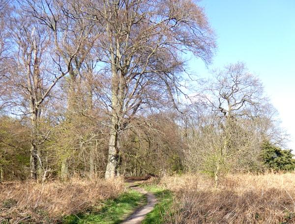 Walk into the Wood. by Gypsyman