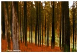 Impressions Knysna forest