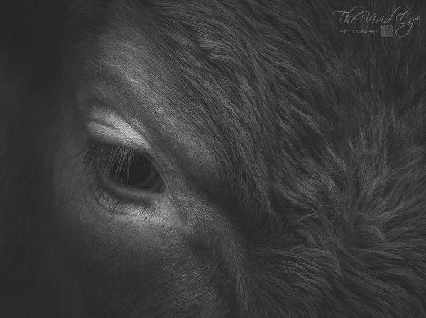 The Bull\'s Eye by MartinWait