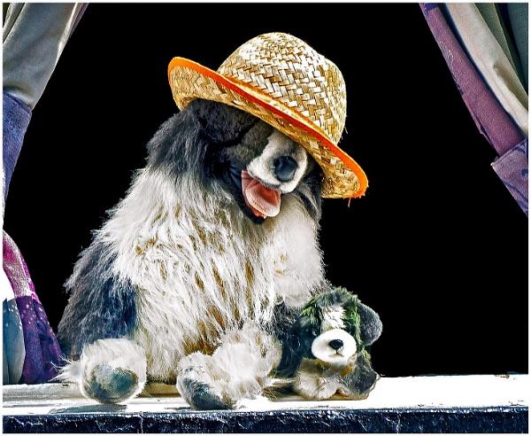Happy Dogs by mac