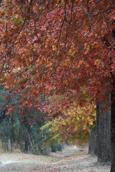 Autumnal splendour by ColleenA