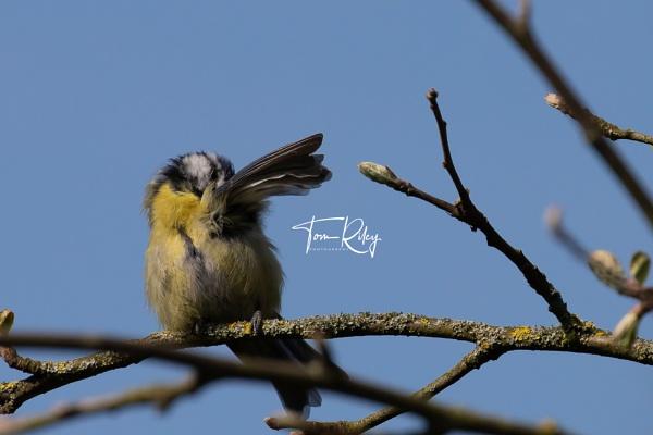 Camera Shy by tomriley