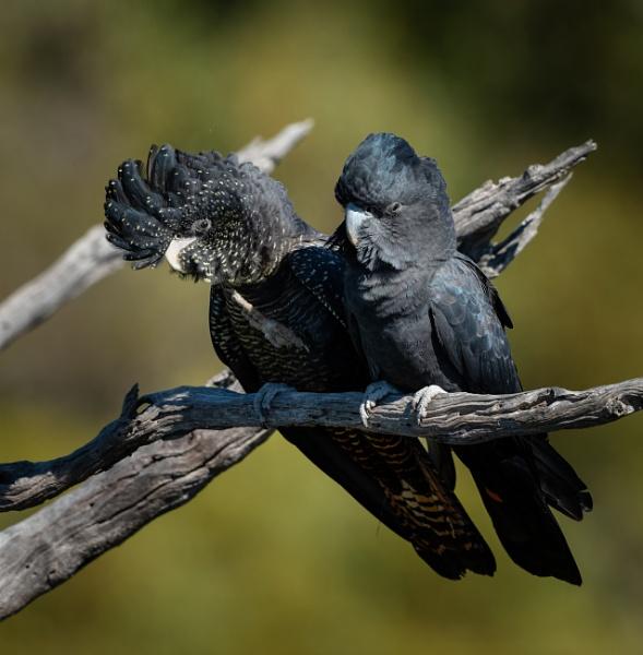 Birds of a feather by Heyneker