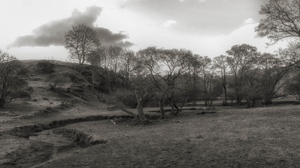 Dead trees by BillRookery