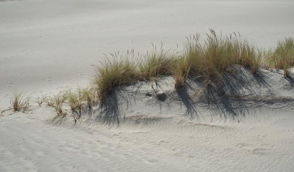 mini dune by alfpics