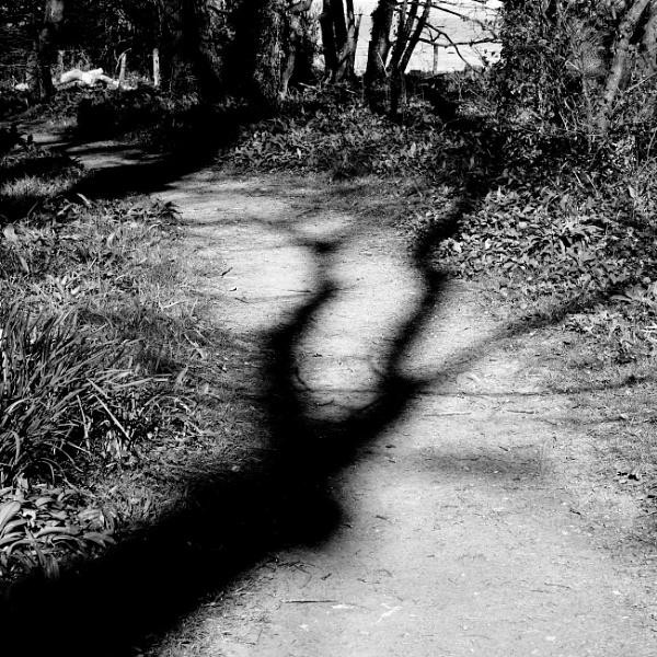 Fork in the path by Backabit