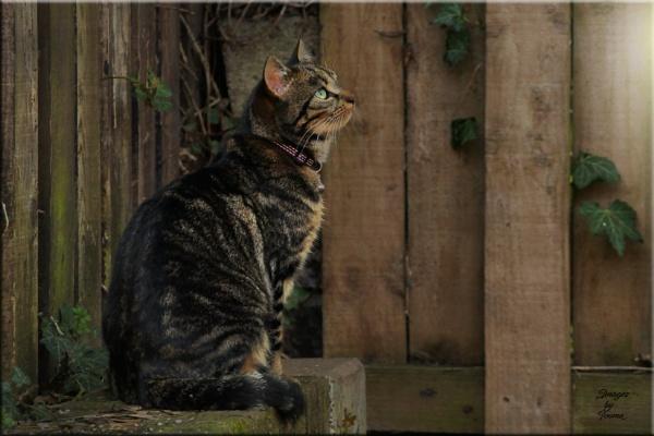 The Cat In The Corner.