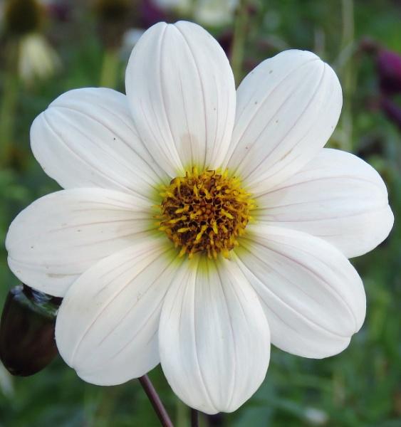 Pretty flower Wakehurst by newbe2