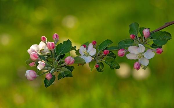 spring 6e by LaoCe