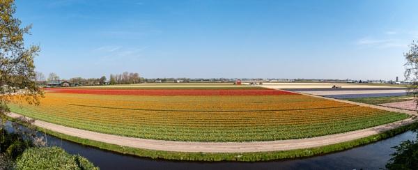 Bulb fields by philstan