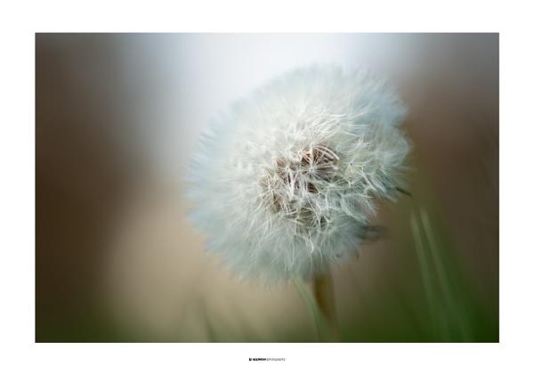 Softly by jpappleton