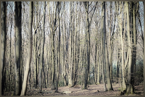 April Forest by kw