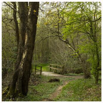 Woodland Path Bridge