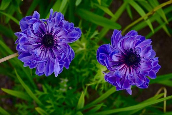 Summer flowers by BertM