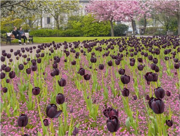 Spring in the park. by franken